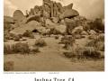 Joshua-Tree-GFX-2019-1161