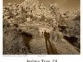 Joshua-Tree-GFX-2019-1234