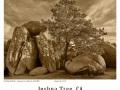Joshua-Tree-GFX-2019-1258