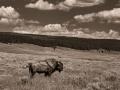 Wyoming-2015-17